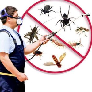 General Extermination of Insects and Rodents